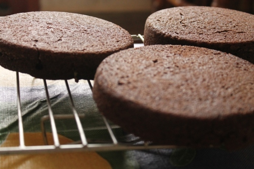 chocolate sponges