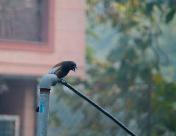A new bird