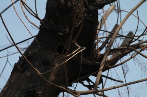 barbet's nest